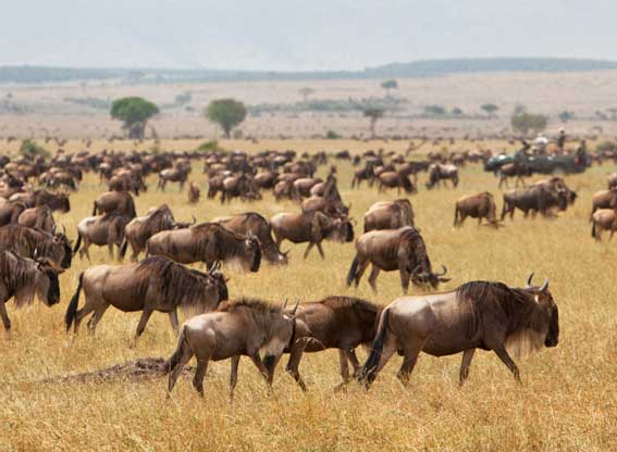 AWS-serengeti-plains1