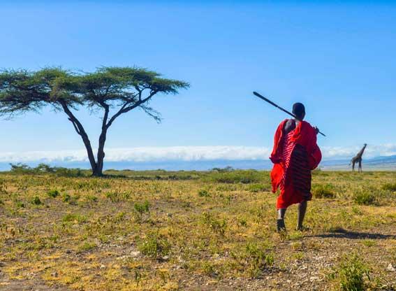 Maasi-girafffe