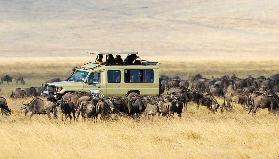 Wildebeest Ngorongoro crater