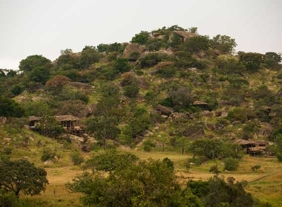 Lamai-Serengeti-G10