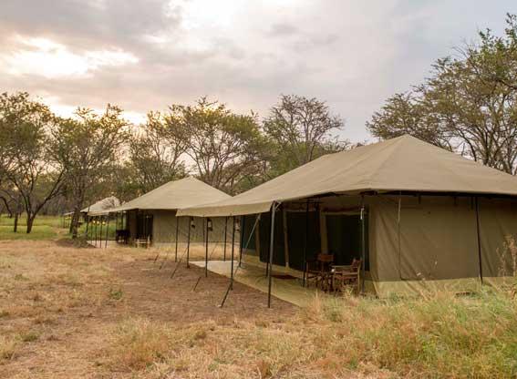 Naona-Moru-Camp-tents